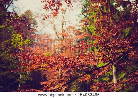 red green and umber colorful autumn leaf