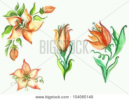 beautiful watercolor floral sprigs of different styles