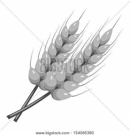 Stalks of barley icon. Gray monochrome illustration of stalks of barley vector icon for web