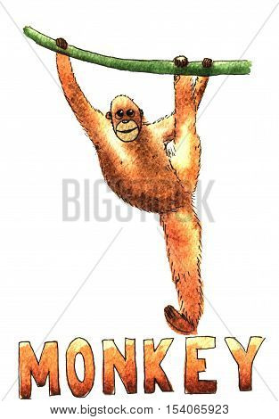 Monkey clamber watercolor hand drawn illustration isolated on white background