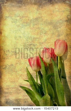 Vintage Tulips Grunge From Photograph