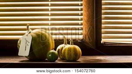 Pumpkins on a wooden window sill on the background of window blinds