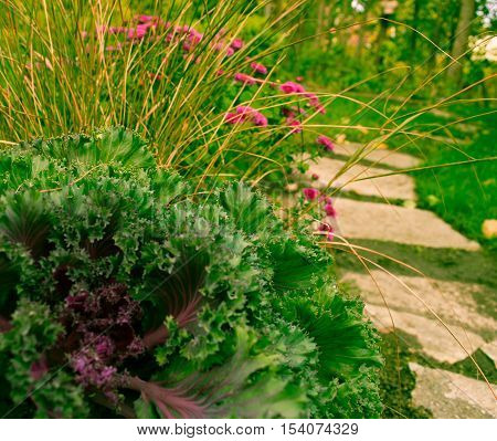 along a curvy path a fall blooming garden with decorative ornamental cabbage grasses and fall blooming mums
