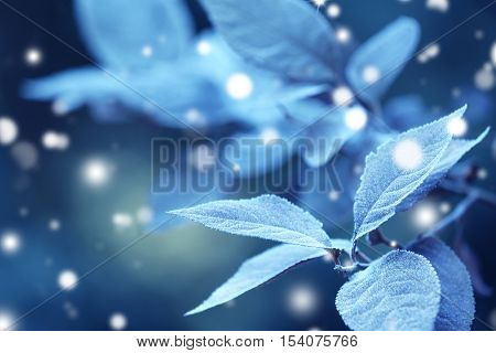 Beautiful frosty leaves, closeup. Snowy effect, winter nature concept.