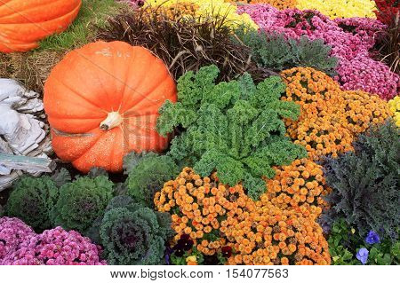 Colorful Autumn Display of Plants and Pumpkins
