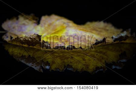 Autumn leaf with reflection on black background.