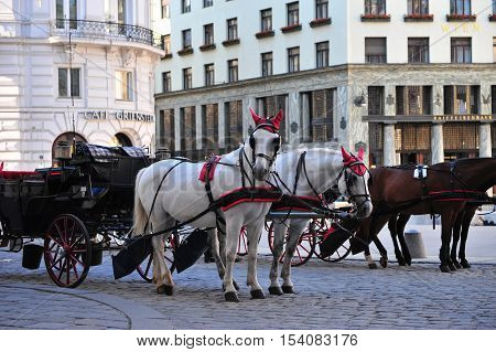 VIENNA AUSTRIA - JUNE 6: Horses carriage at Hofburg Vienna on June 6 2016. Vienna is a capital and largest city of Austria.