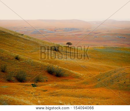 autumn hill landscape with tree