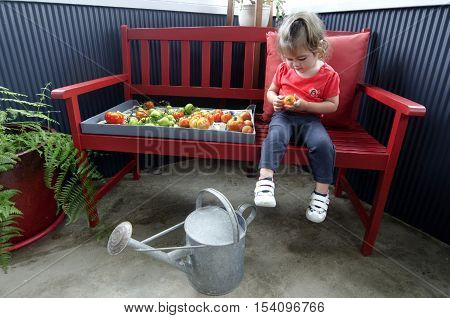 Adorable little girl holds ripe and unripe tomatoes.