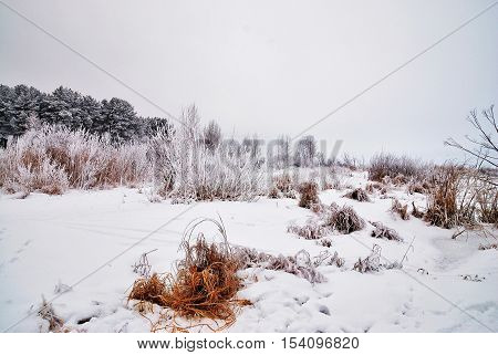 The amazing beauty of the enchanting winter landscape. All the trees covered with frost. Nature rests under a white cover.