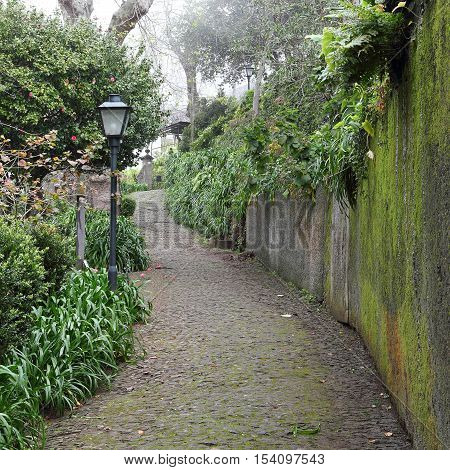 Way in the picturesque Municipal park of Monte on Madeira at a foggy day