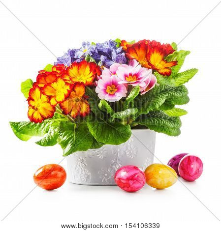 Spring primula flowers and colorful easter eggs isolated on white background. Objects with clipping path