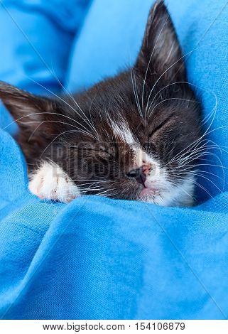 a adorable kitten black and white on blue