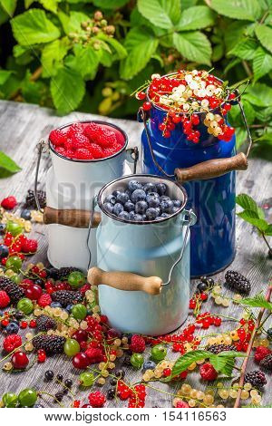 Freshly Harvested Wild Berry Fruits In Summer