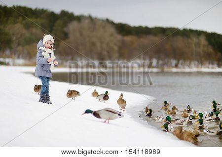 Little girl feeding ducks on winter day