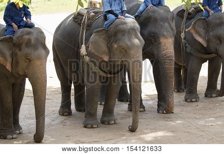 Image of a elephant and mahout on nature background in thailand.