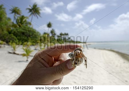 Human hands holds small hermit crab on tropical Island in Aitutaki lagoon Cook Islands