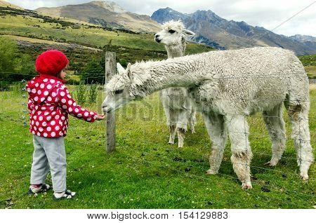 Little Girl Feed Animals