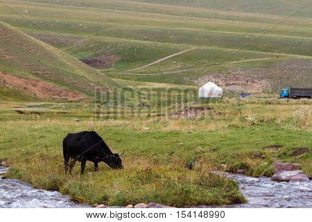 Cow Mountain Yurt