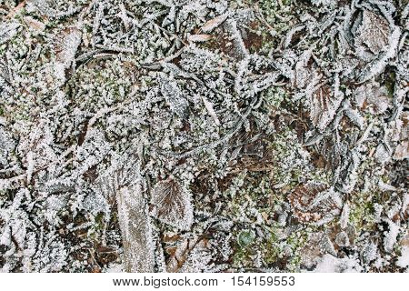Sticks, grass and leaves covered with frost. Texture of early winter ground, nature background