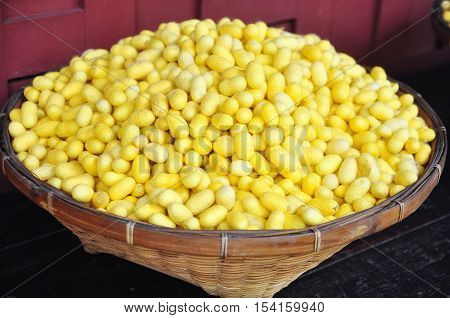 Yellow Cocoons Of Silkworm For Making Silk In Asia