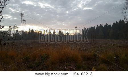 opkomende zon achter de bomen in net gekapt bos