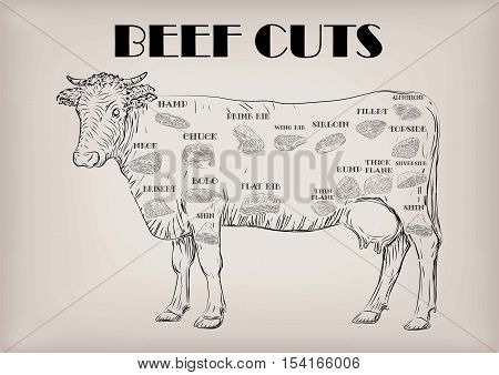 Beef cow bull whole carcass cuts cut parts infographics scheme sign signboard poster butchers guide: neck chunk brisket fillet rump. Vector beautiful horizontal closeup black outline beige background