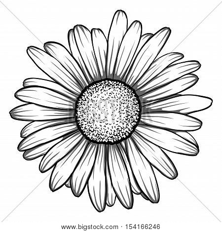 beautiful monochrome black and white daisy flower isolated. for greeting cards and invitations of the wedding birthday Valentine's Day mother's day and other seasonal holiday