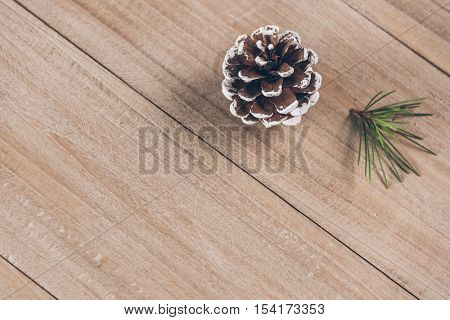 studio shot of pinecone and pine bough.