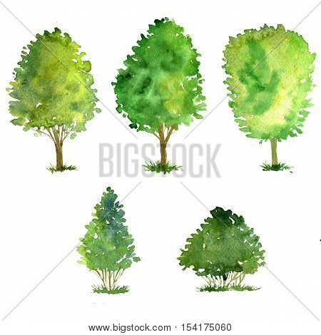 set of trees drawing by watercolor, bushes and decidious, green green foliage, isolated natural elements, hand drawn illustration