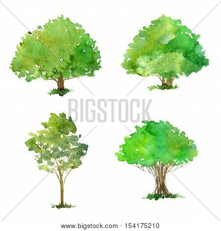 set of trees drawing by watercolor, bushes and decidious, green foliage, isolated natural elements, hand drawn illustration
