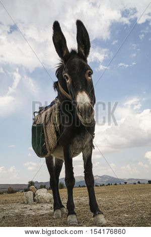 a funny donkey looking to the camera in the countryside