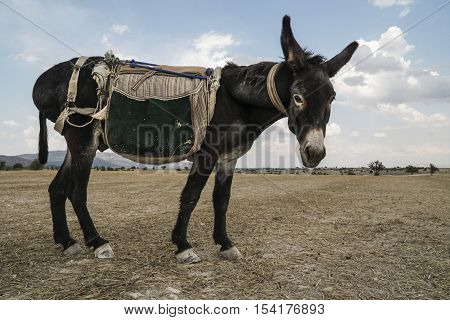 Donkey Standing In The Countryside