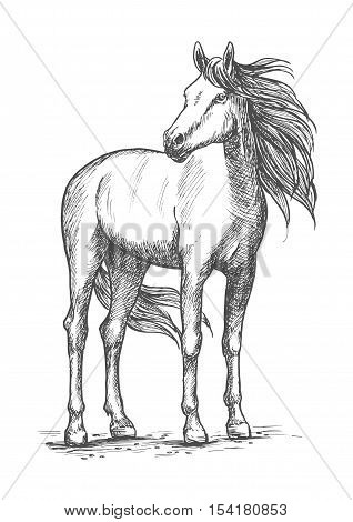 White horse sketch portrait. Wild mustang standing with turned head and looking aside. Vector racehorse with calm look and wind in waving mane