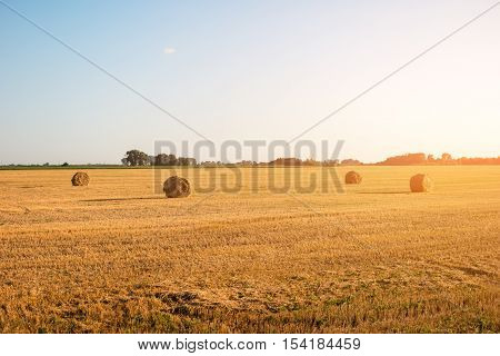 Yellow mown field. Clear sky at daytime. Feel the absolute freedom. Beauty of homeland.