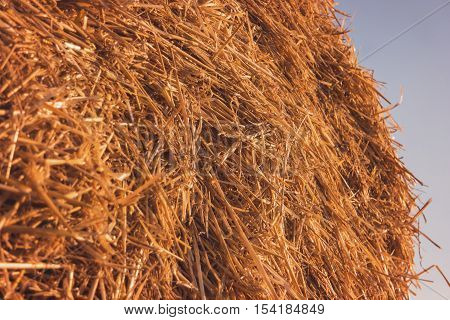 Haystack on sky background. Pile of dry yellow straw. Ingredient of fertilizer. Agriculture is thriving.