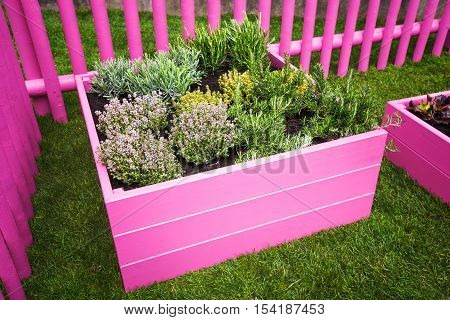 Herb garden. Pink raised beds with herbs and vegetables. Urban garden design