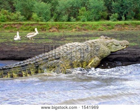 6M-Long Crocodile, Lake Chamo, Ethiopia