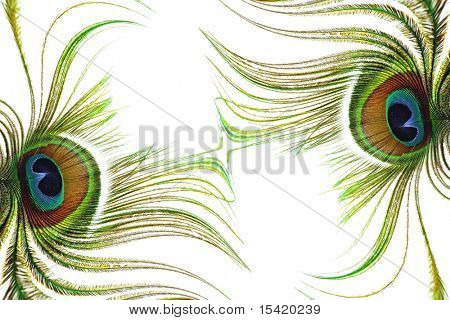 Peacock Feathers Abstract