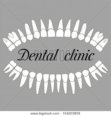 logo dental clinic teeth upper and lower jaws in vector