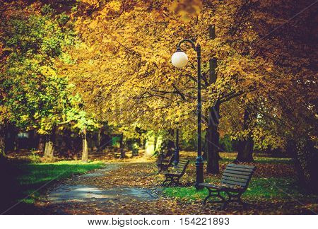 Autumn Foliage in the Park. Colorful October Foliage. Park Alley