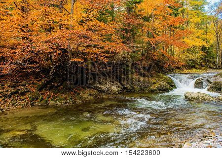 Fall Foliage Mountain River Landscape. Autumn Foliage at the River.