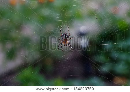 Spider orb-web insect with web pattern. macro view, horizontal soft focus photo