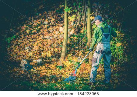 Gardener Leaves Raking. Young Caucasian Gardener Landscaper Cleaning Garden From Leaves Using Rake.