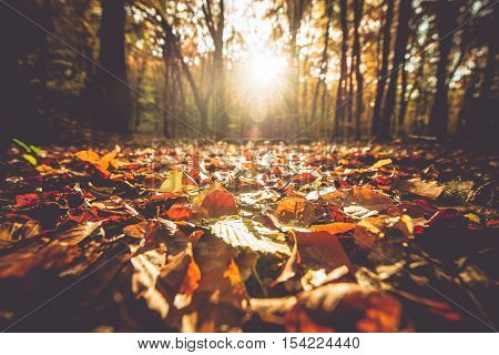 Golden Autumn Foliage and the Scenic Sunset. Sunny Fall Foliage