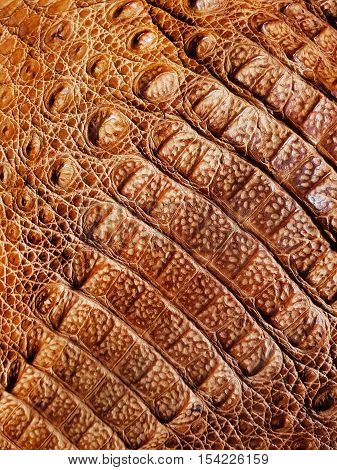 An Authentic Brown Aligator Leather Texture Background