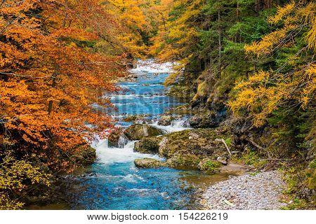Scenic Autumn Foliage in the Mountain River Creek. Fall Foliage Autumn Colours Scenery.