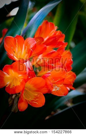 Red and orange bunch of flowers in a Botanic garden