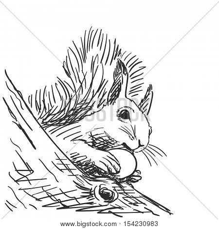 Sketch of squirrel gnawing nut Hand drawn vector illustration