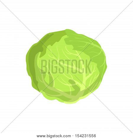 Cabbage Product Rich In Folic Acid. Simple Colorful Flat Vector Illustration On White Background.